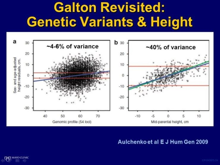 Galton Revisited Phenotypic and Genetic Variance for Height presentation slide.jpg